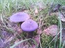 Синие грибы